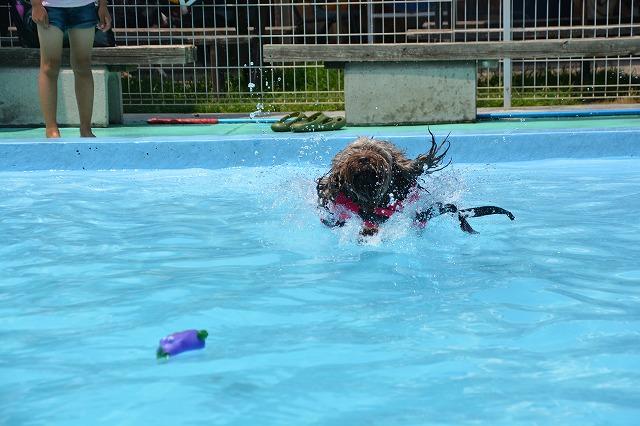 犬プールへダイブ1回目-バシャーン