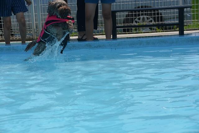 犬プールへダイブ2回目-1