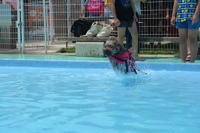 犬プールへダイブ3回目-ダイブ