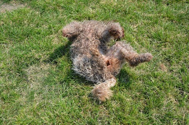 芝生でゴロゴロ2