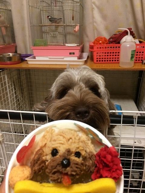 犬用ケーキと本物比較